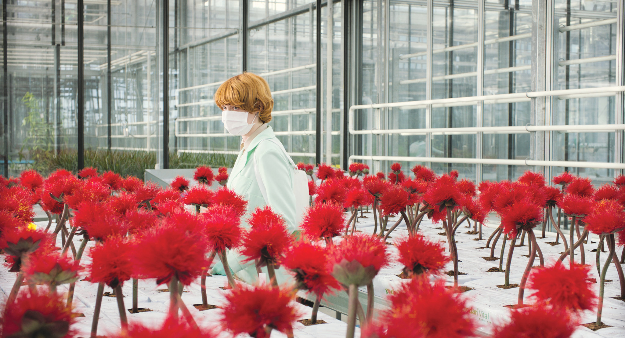 Character looking at red flowers